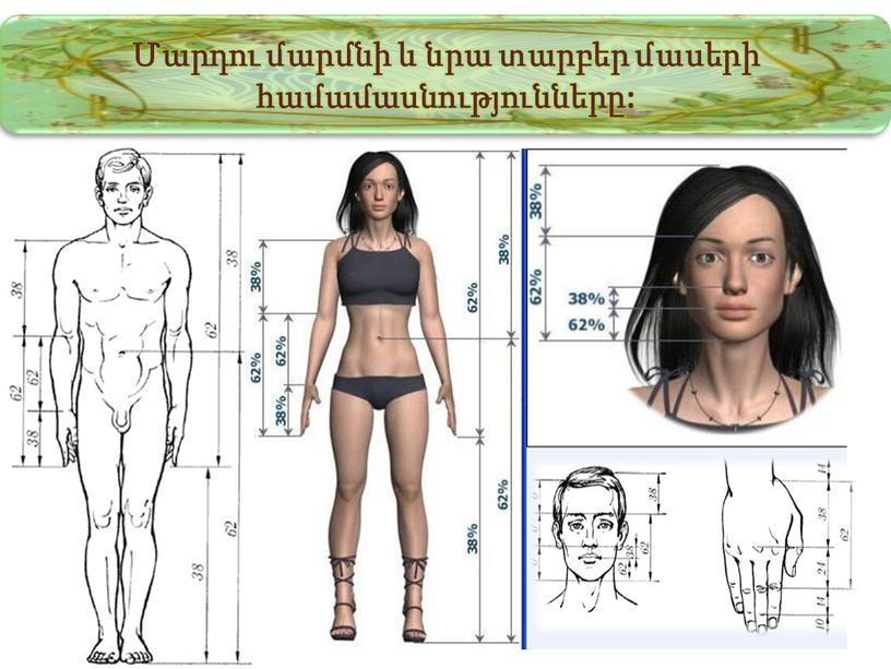 Մարդու մարմնի և նրա տարբեր մասերի համամասնությունները: