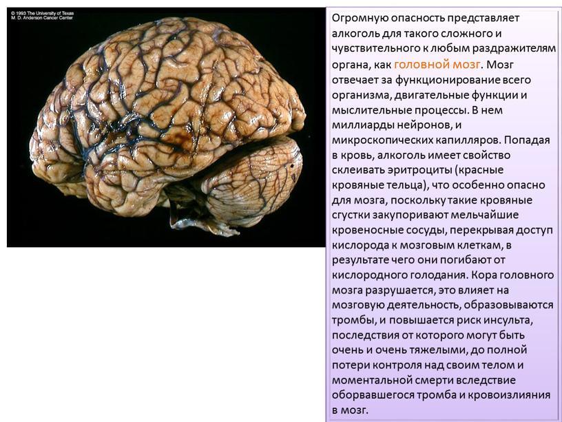 Огромную опасность представляет алкоголь для такого сложного и чувствительного к любым раздражителям органа, как головной мозг
