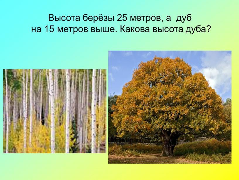 Высота берёзы 25 метров, а дуб на 15 метров выше