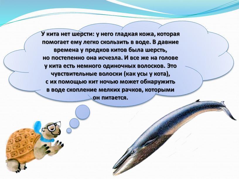 У кита нет шерсти: у него гладкая кожа, которая помогает ему легко скользить в воде