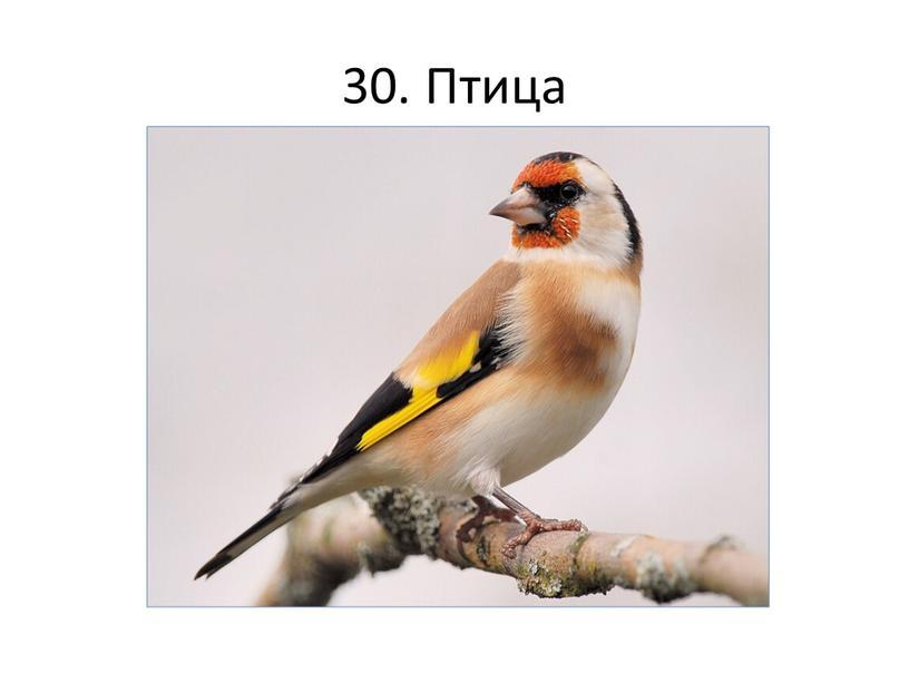 30. Птица