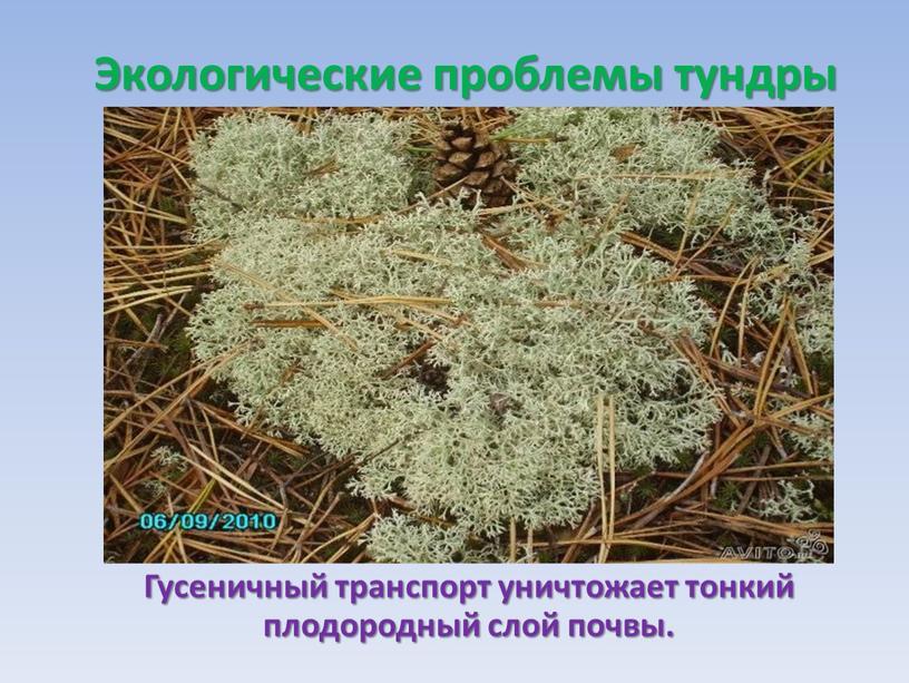 Экологические проблемы тундры Гусеничный транспорт уничтожает тонкий плодородный слой почвы