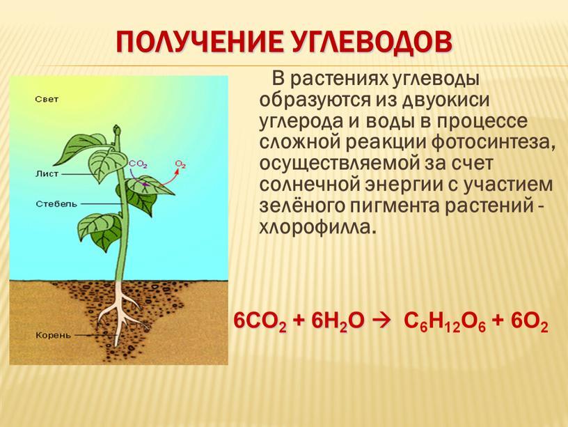 домкрат фотосинтез образует углеводы первой встрече