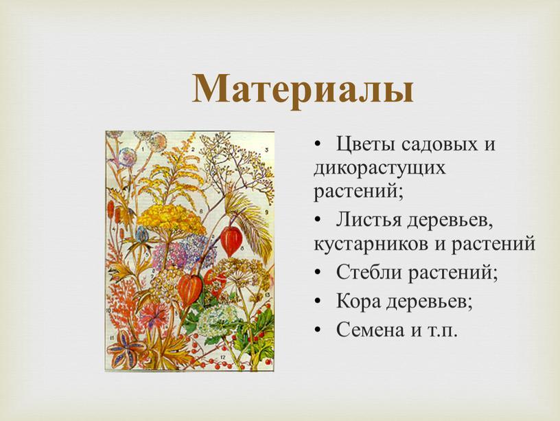 Материалы Цветы садовых и дикорастущих растений;