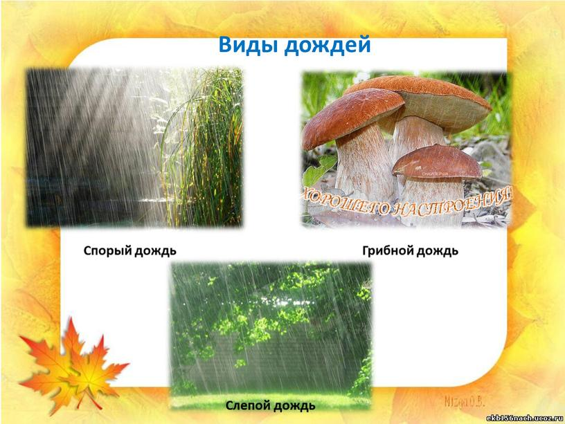 Виды дождей Спорый дождь Грибной дождь