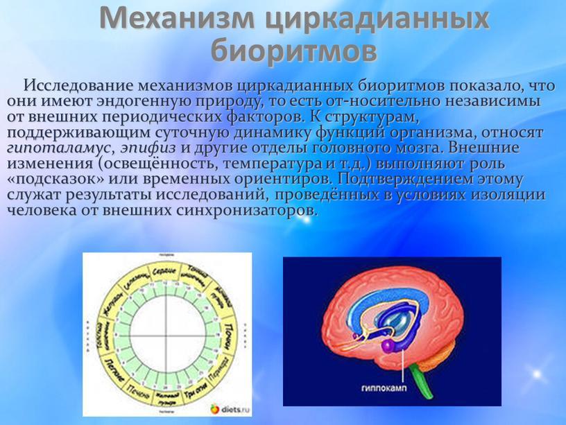 Механизм циркадианных биоритмов