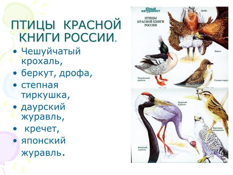 ПТИЦЫ КРАСНОЙ КНИГИ РОССИИ.