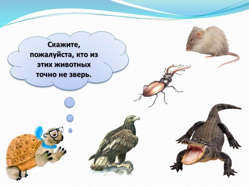 Скажите, пожалуйста, кто из этих животных точно не зверь