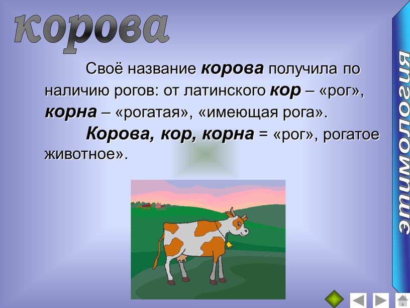 Своё название корова получила по наличию рогов: от латинского кор – «рог», корна – «рогатая», «имеющая рога»