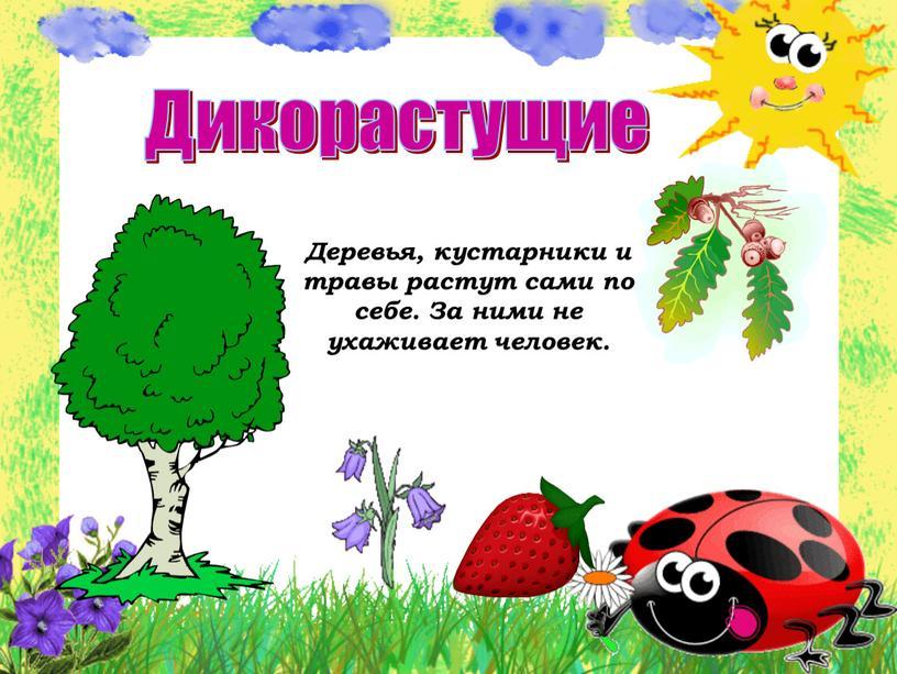 Дикорастущие Деревья, кустарники и травы растут сами по себе