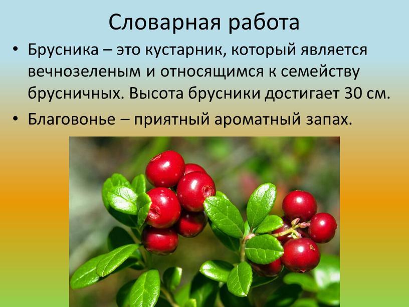 Словарная работа Брусника – это кустарник, который является вечнозеленым и относящимся к семейству брусничных