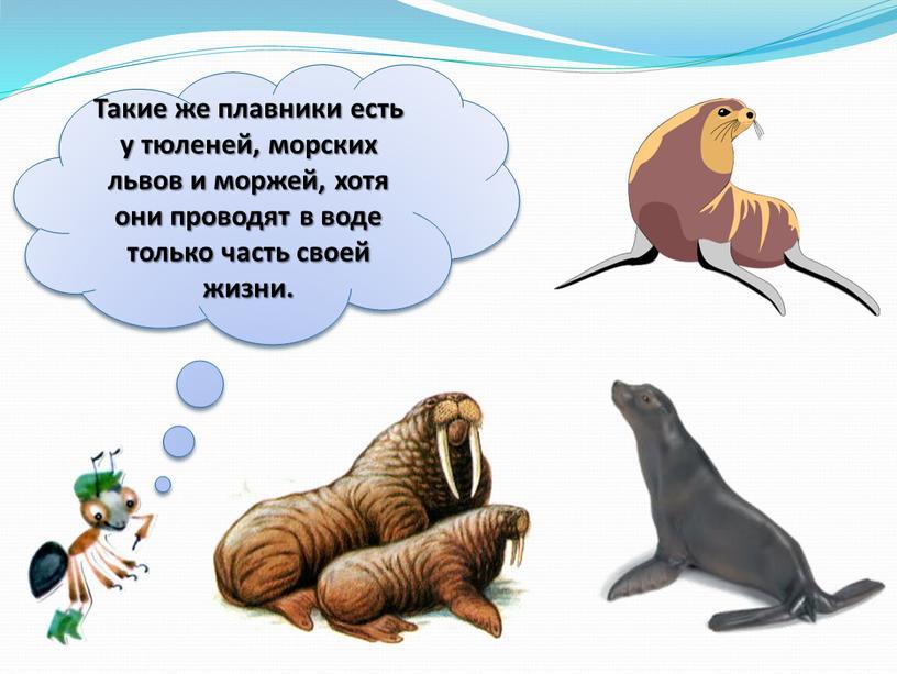 Такие же плавники есть у тюленей, морских львов и моржей, хотя они проводят в воде только часть своей жизни
