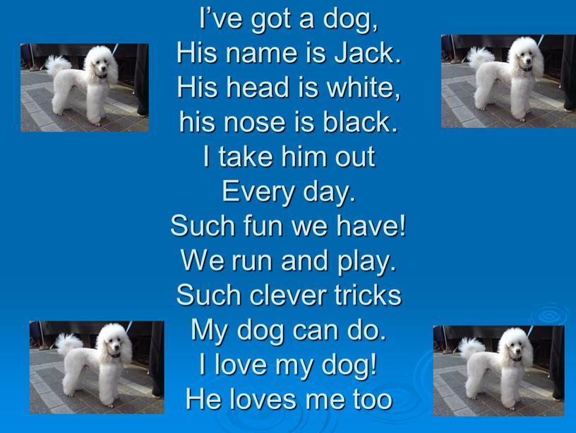 I've got a dog, His name is Jack