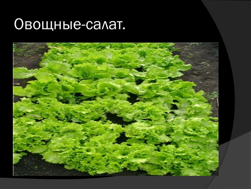 Овощные-салат.
