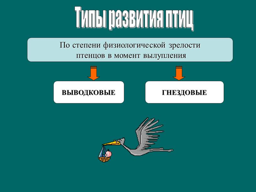 Типы развития птиц По степени физиологической зрелости птенцов в момент вылупления