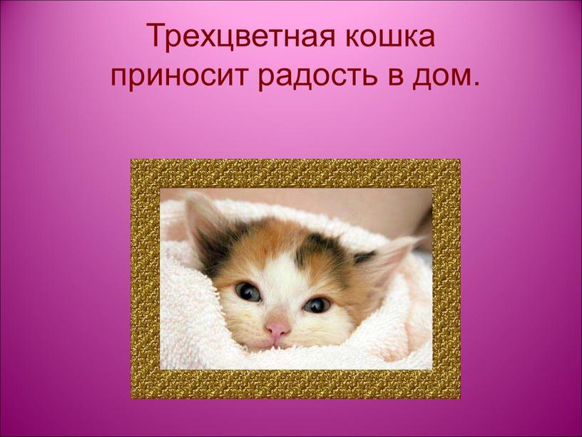 Трехцветная кошка приносит радость в дом