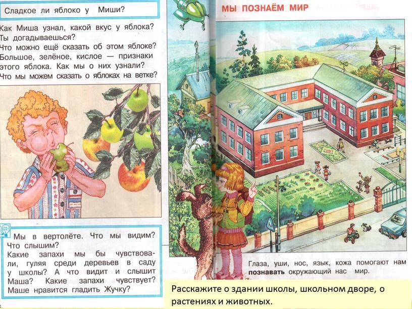 Расскажите о здании школы, школьном дворе, о растениях и животных