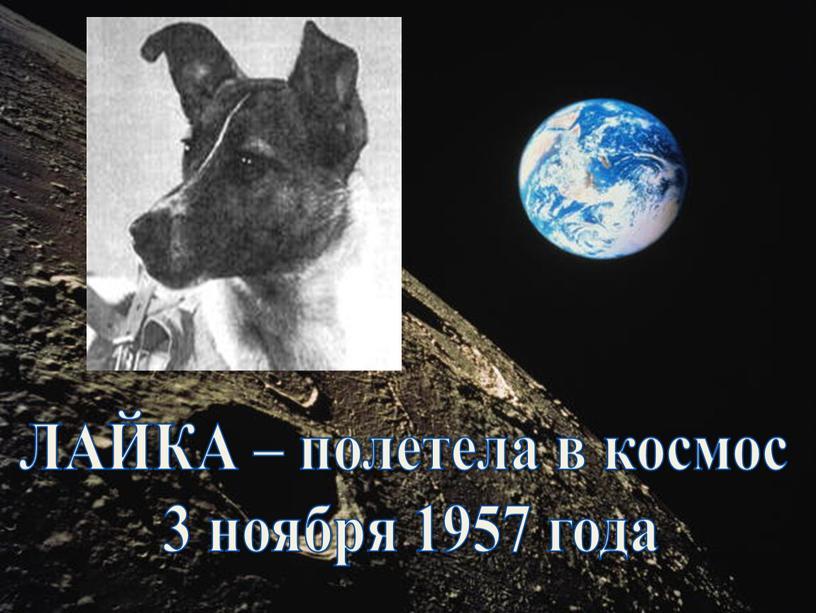 ЛАЙКА – полетела в космос 3 ноября 1957 года