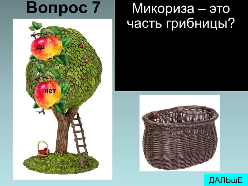 Вопрос 7 ДАЛЬшЕ Микориза – это часть грибницы?