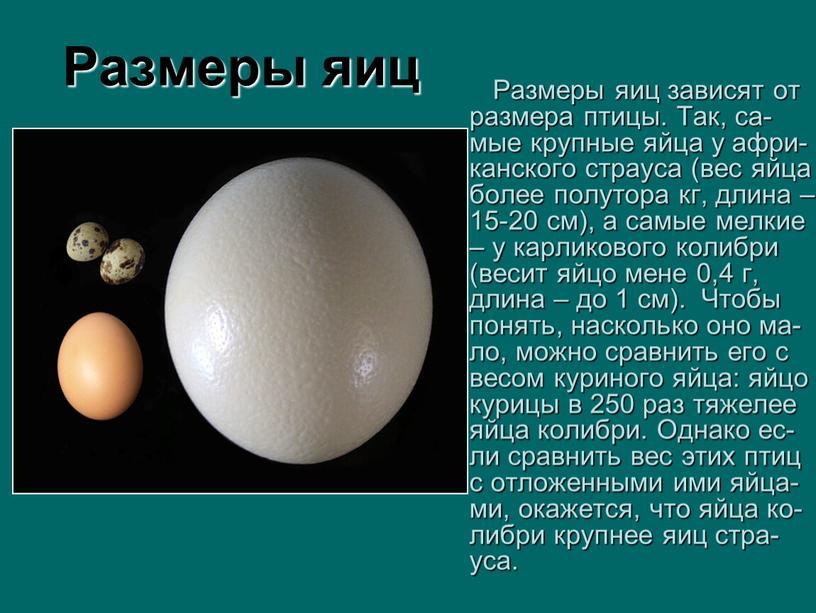 Размеры яиц Размеры яиц зависят от размера птицы
