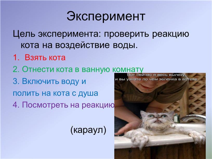 Эксперимент Цель эксперимента: проверить реакцию кота на воздействие воды