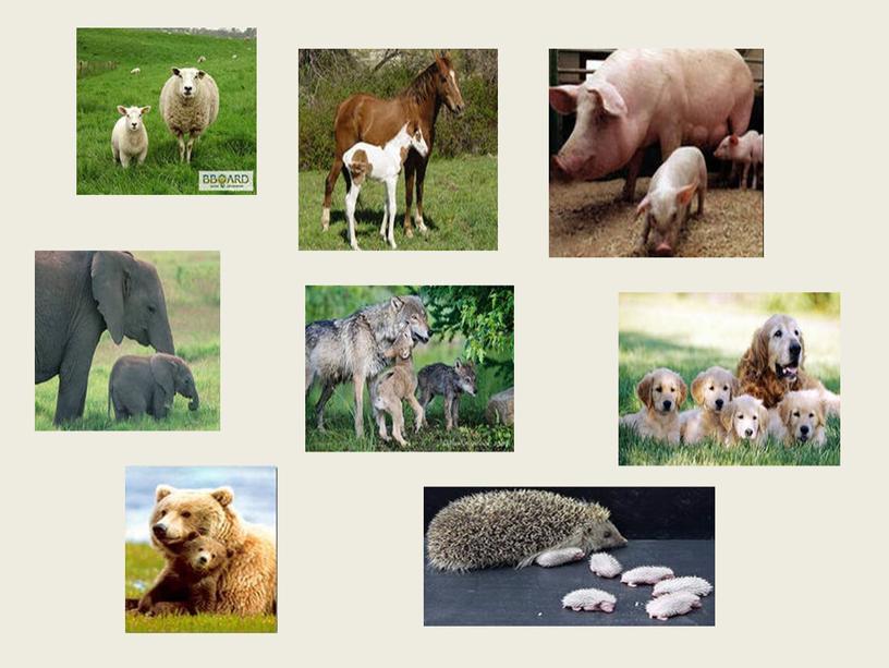 """Конспект урока с презентацией для 1 класса по окружающему миру на тему """"Звери - млекопитающие"""""""
