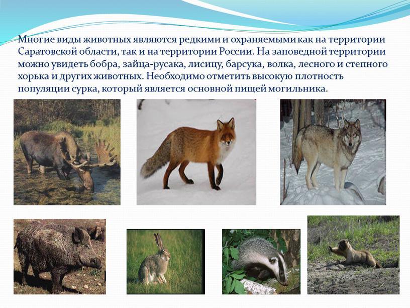 Многие виды животных являются редкими и охраняемыми как на территории