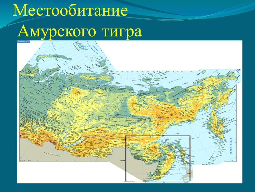 Местообитание Амурского тигра