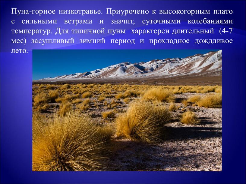 Пуна-горное низкотравье. Приурочено к высокогорным плато с сильными ветрами и значит, суточными колебаниями температур
