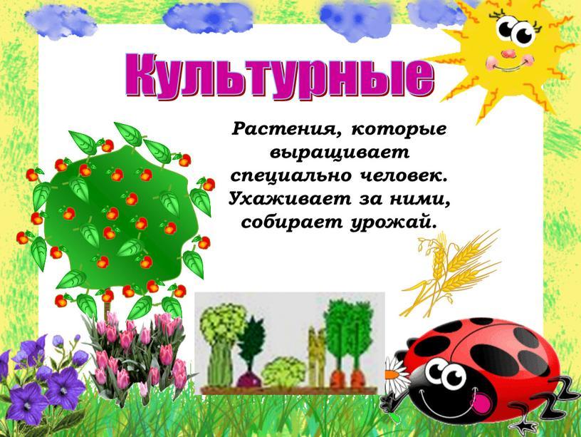 Культурные Растения, которые выращивает специально человек