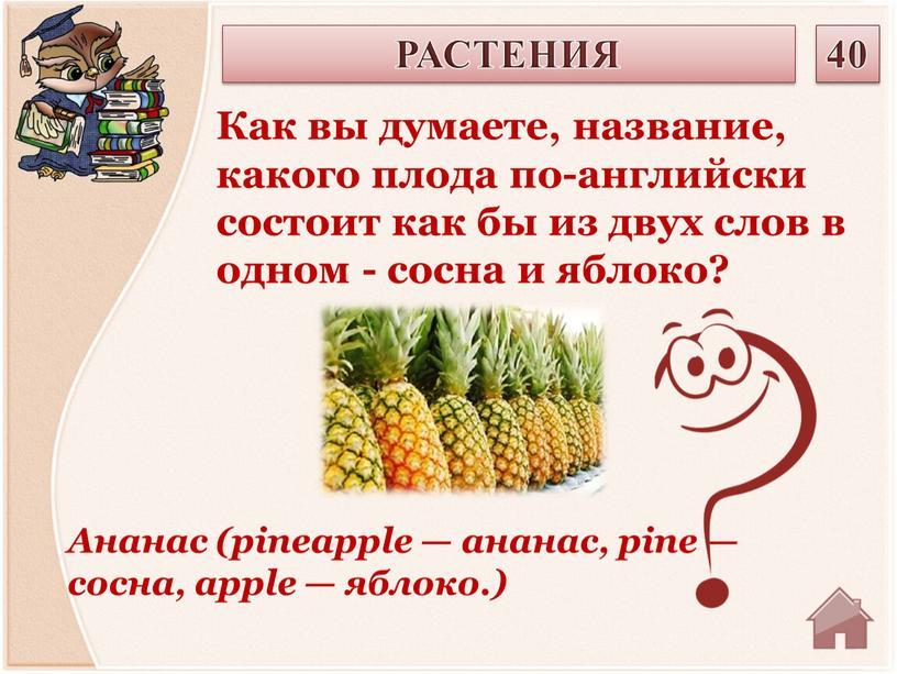 Ананас (рinеаррlе — ананас, рinе — сосна, аррlе — яблоко