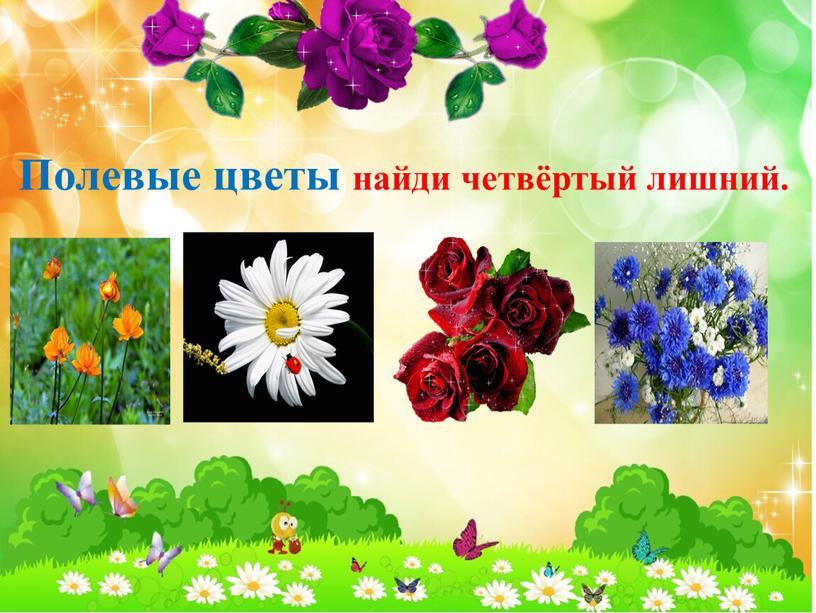 Полевые цветы найди четвёртый лишний