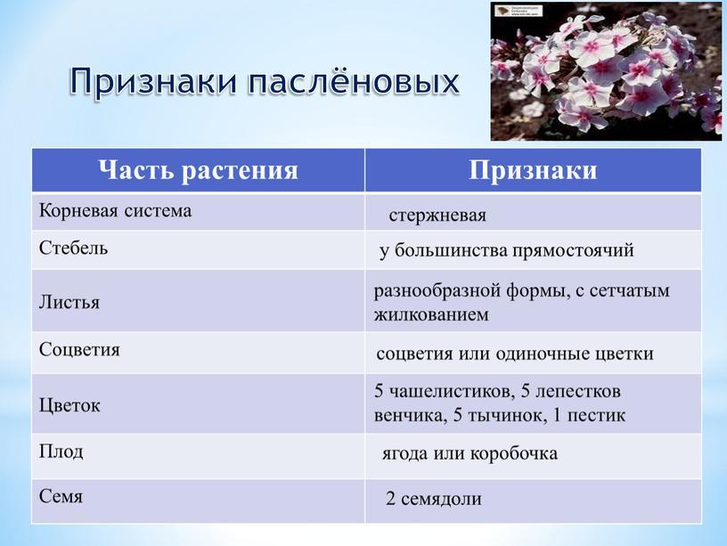 Часть растения Признаки Корневая система