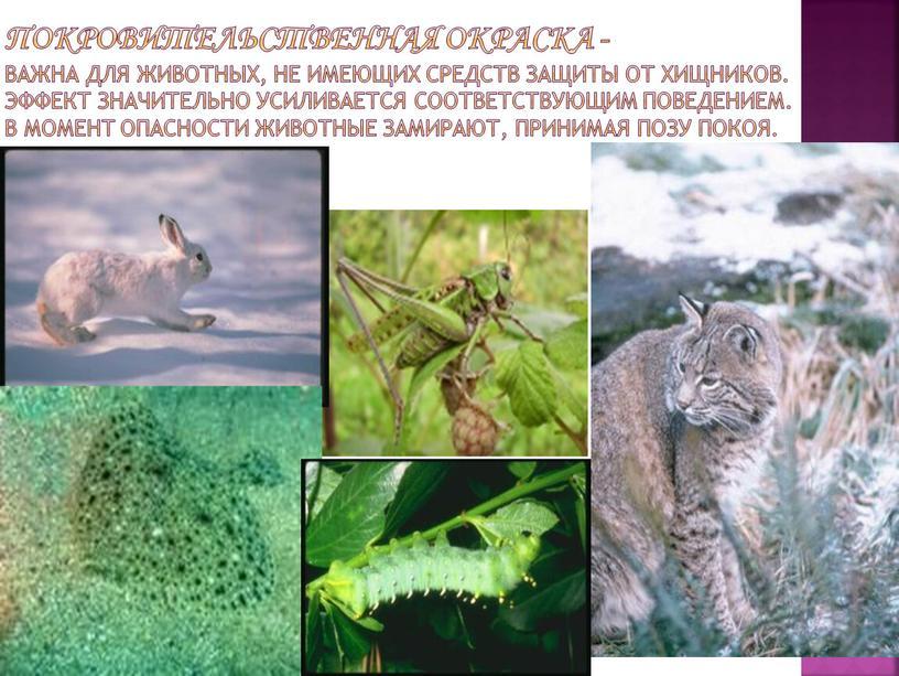Покровительственная окраска - важна для животных, не имеющих средств защиты от хищников
