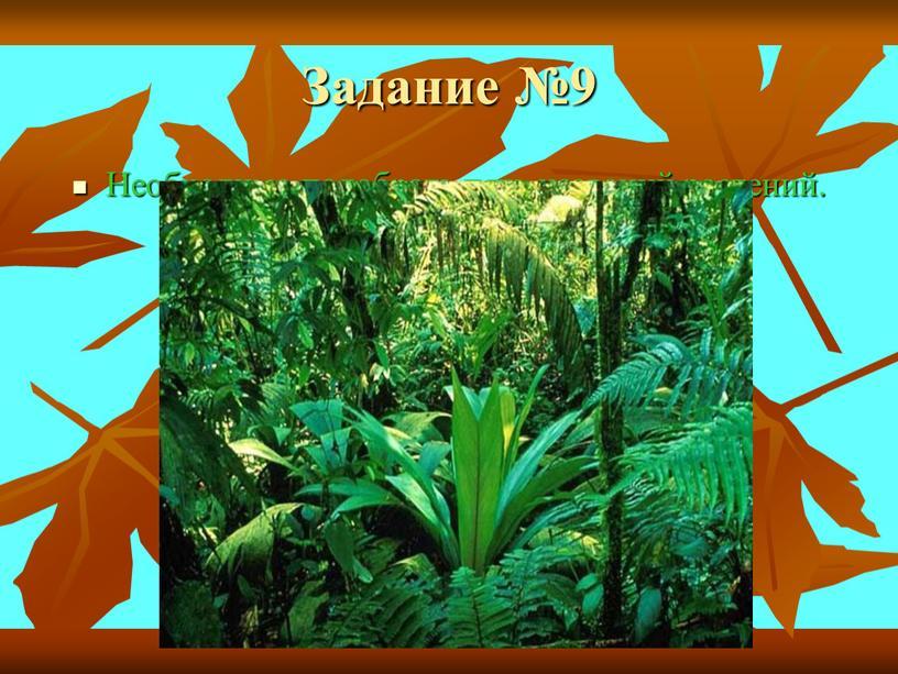 Задание №9 Необходимо подобрать пять названий растений