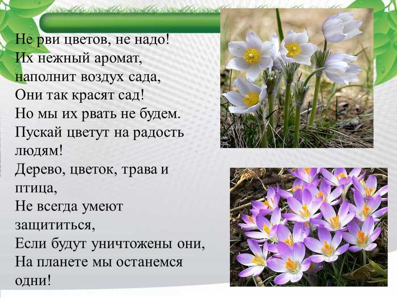 Не рви цветов, не надо! Их нежный аромат, наполнит воздух сада,