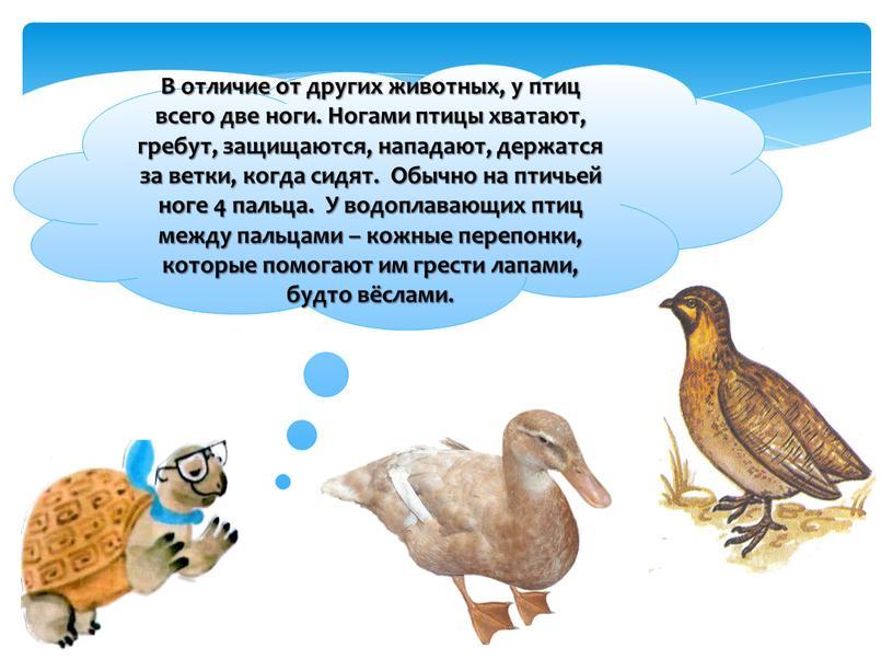 В отличие от других животных, у птиц всего две ноги