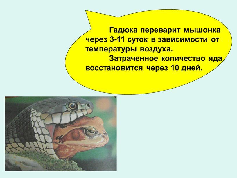 Гадюка переварит мышонка через 3-11 суток в зависимости от температуры воздуха