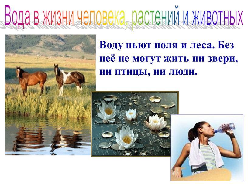 Вода в жизни человека, растений и животных