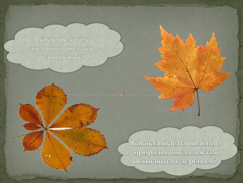 В какое время года листья бывают такие разноцветные?