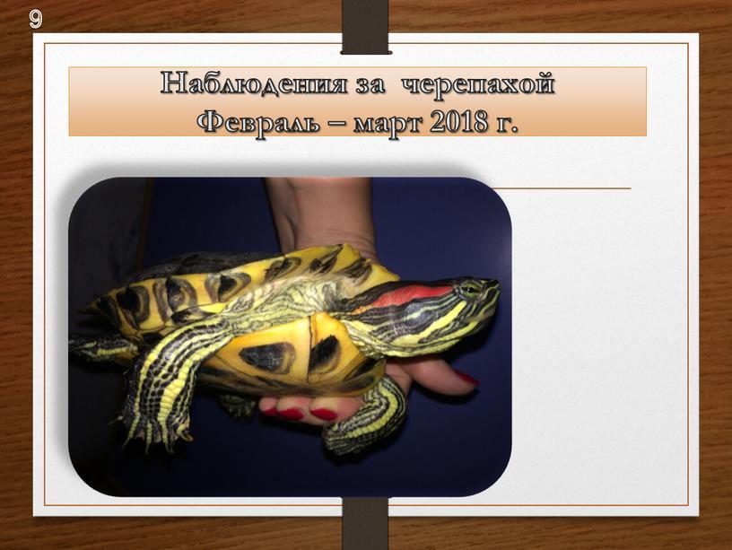 Наблюдения за черепахой Февраль – март 2018 г
