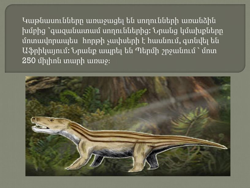 Կաթնասունները առաջացել են սողունների առանձին խմբից `գազանատամ սողուններից: Նրանց կմախքները մոտավորապես հորթի չափսերի է հասնում, գտնվել են Աֆրիկայում: Նրանք ապրել են Պերմի շրջանում ՝ մոտ…