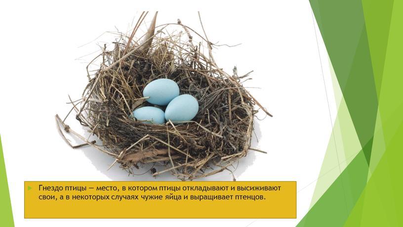 Гнездо птицы — место, в котором птицы откладывают и высиживают свои, а в некоторых случаях чужие яйца и выращивает птенцов