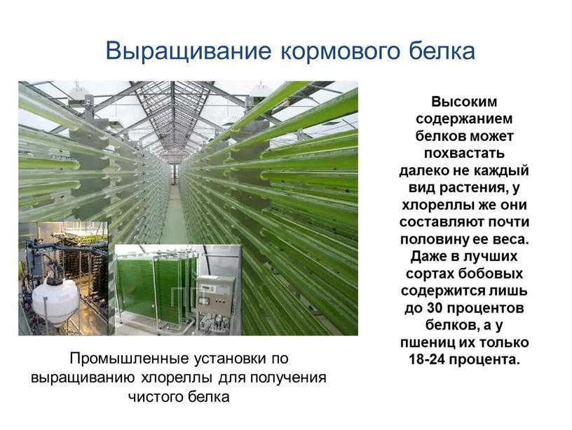 Промышленные установки по выращиванию хлореллы для получения чистого белка