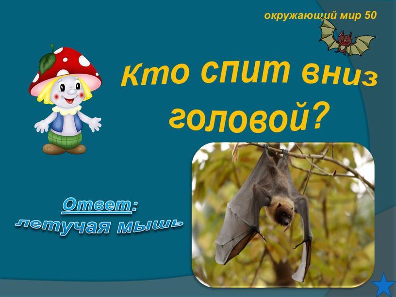 Кто спит вниз головой? Ответ : летучая мышь