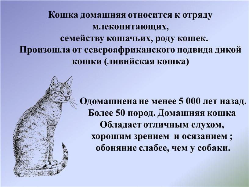 Кошка домашняя относится к отряду млекопитающих, семейству кошачьих, роду кошек