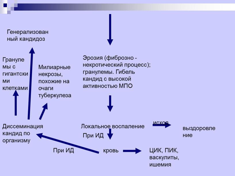 Эрозия (фиброзно - некротический процесс); гранулемы