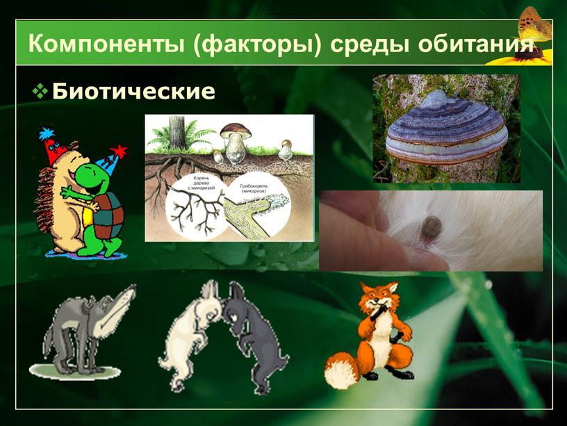 Биотические Компоненты (факторы) среды обитания