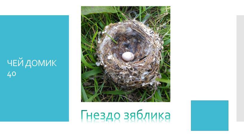 ЧЕЙ ДОМИК 40 Гнездо зяблика
