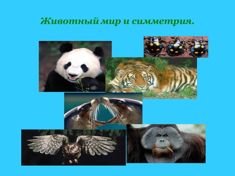 Животный мир и симметрия.